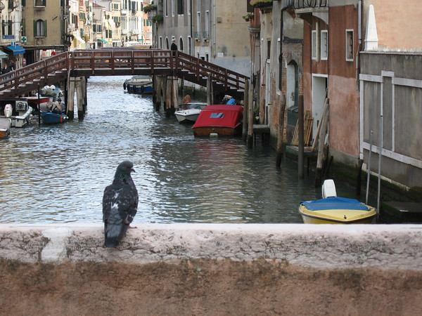 VeniceCanal.jpg
